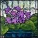 Nature morte aux violettes - Dion, Huguette