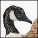 Canada Goose I - Ivankovic, Ljubomir