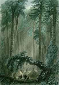 A Forest Scene - Bartlett, W. H.